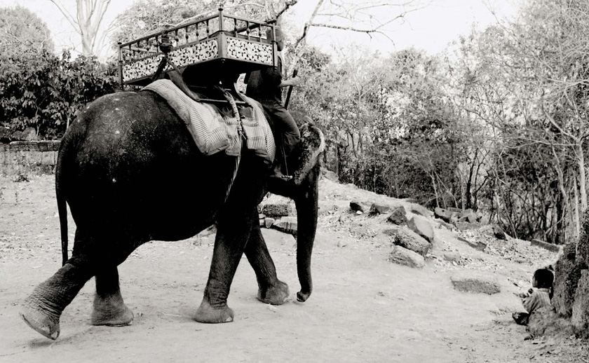 Black and white photo of an elephant being ridden at Angkor Wat.