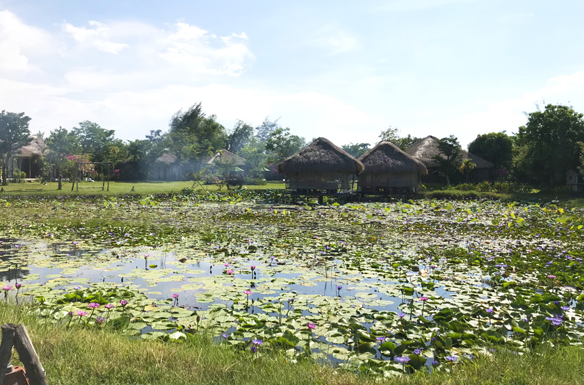 Lilly Pads on a pond with wooden huts in the Hoi An countryside